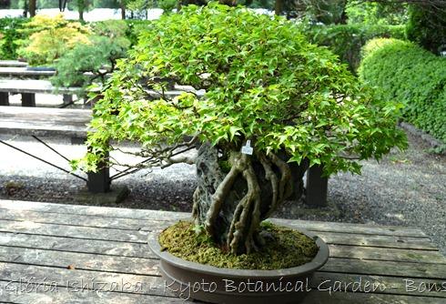 Glória Ishizaka -   Kyoto Botanical Garden 2012 - 60