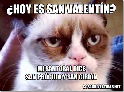 san valentin gato  Próculo