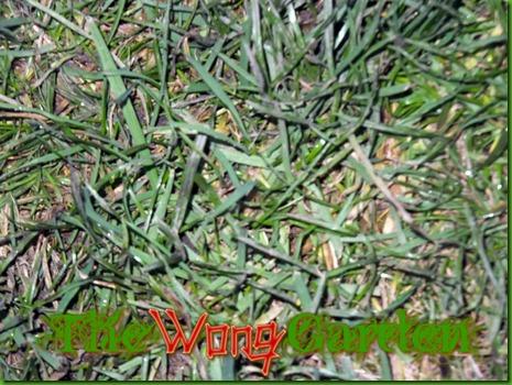 raked grass