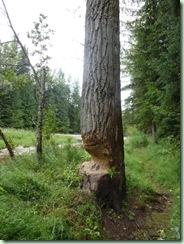 FR beavers