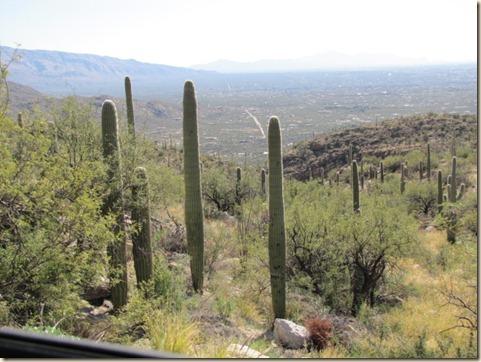 Tucson Drive & Mt. Lemmon 012