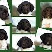Honden » L-nest Gippe - Larcchan
