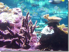 2012.09.02-028 aquarium