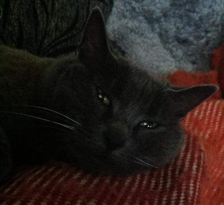 katten Bamsan
