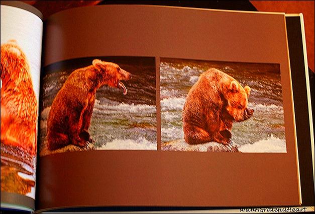 Alaska Book 4