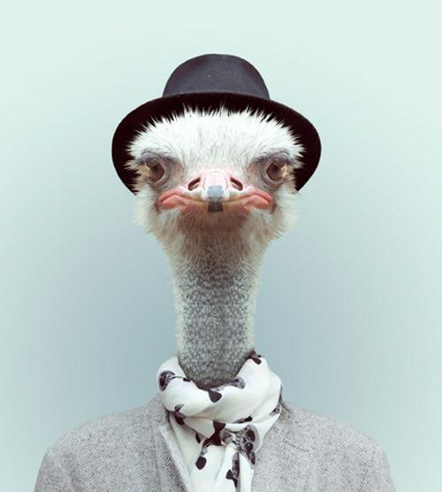 animais roupas humanas - avestruz