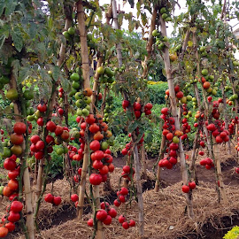 by Deborah Arin - Nature Up Close Gardens & Produce (  )