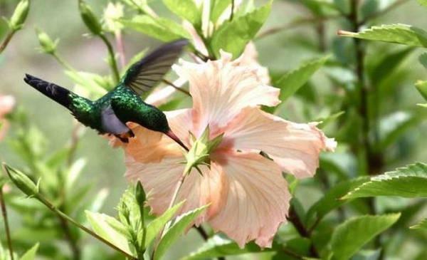 5- Beija-flores