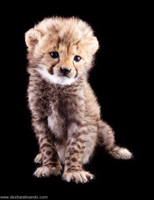 filhotes recem nascidos zoo zoologico desbaratinando animais lindos fofos  (15)