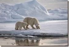 Ghiacci Artico al minimo storico