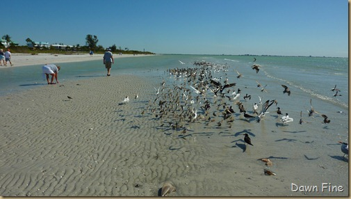 Sanibel Shell and birds_142