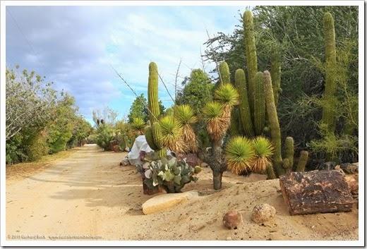 141231_Tucson_Bachs_0070