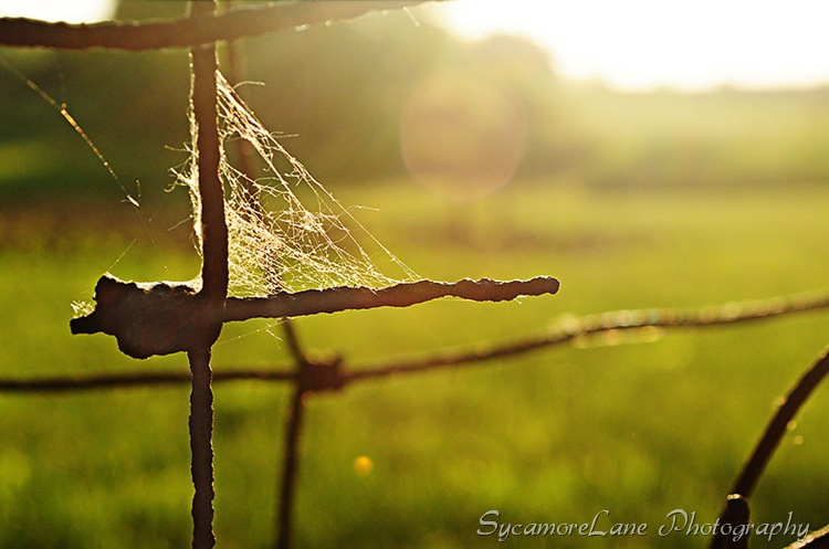 barbed wire fence-w