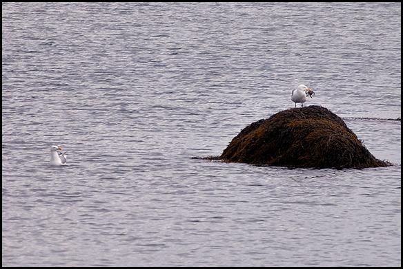 08 - sea gulls