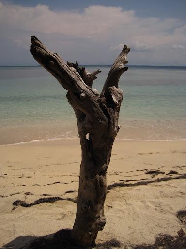 Driftwood on Isla Zapatilla, Bocas del Toro, Panama