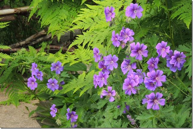 violett 4