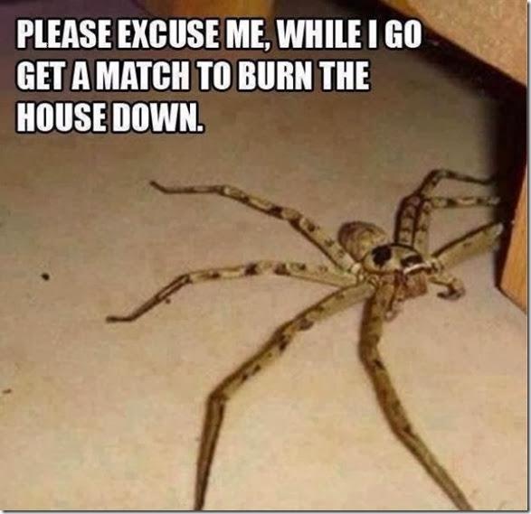 australia-scary-spiders-021