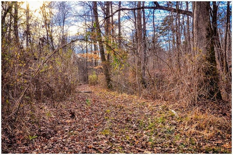 walk in the woods--2 copy