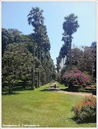 Королевский ботанический сад. Канди. Шри-Ланка. Фото Холоденина А. www.timeteka.ru