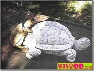 funny-pictures-horny-turtle-0gi