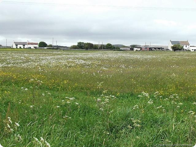 flowery pasture