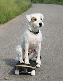 weird-pet-tricks-skateboard_medium