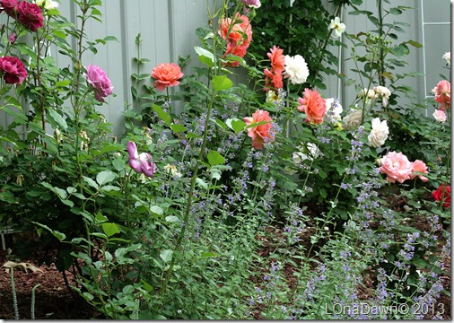 Rosegarden2_632013