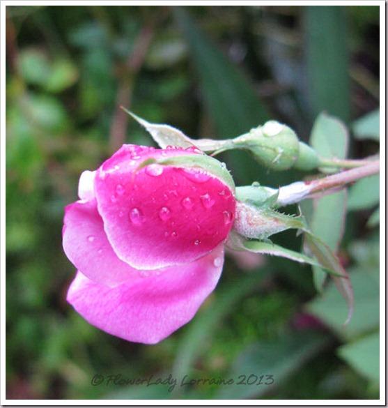 02-14-old-blush