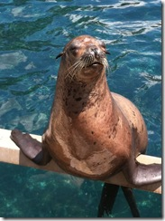 seal close