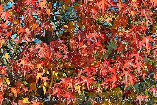 7  Glória Ishizaka - Folhas de Outono 2013