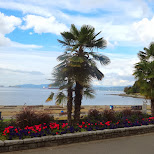 tropical trees at Vancouver bay in Vancouver, British Columbia, Canada