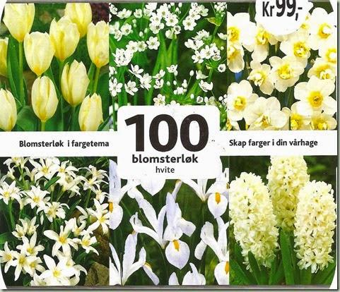 løkplanter 001