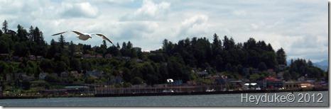 Sea Gull and Astoria