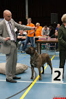 20130510-Bullmastiff-Worldcup-1310.jpg