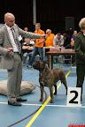 20130510-Bullmastiff-Worldcup-1310.jpg