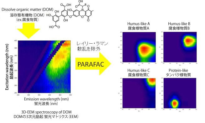 図2 河川中の溶存態有機物の質的評価を可能にする3次元励起蛍光特性の分析と,複数の蛍光波長ピークを統計的に分離する方法(Parallel Factor Analysis; PARAFAC)の模式図 DOCやDONの濃度に加え,PARAFACにより分離された異なる蛍光特性を持つDOM相互の強度比等を解析することで,DOMの質的相違を検討できる。 / Figure 2 Three- dimension fluorescence excitation-emission matrix (3D-EEM) of DOM in river water, and parallel factor analysis (PARAFAC). The combination of 3D-EEM spectroscopy and PARAFAC as well as the concentrations of DOM can make both quantitative and qualitative evaluations of DOM.