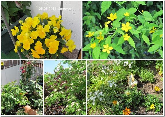 2013-Juni-Garten2