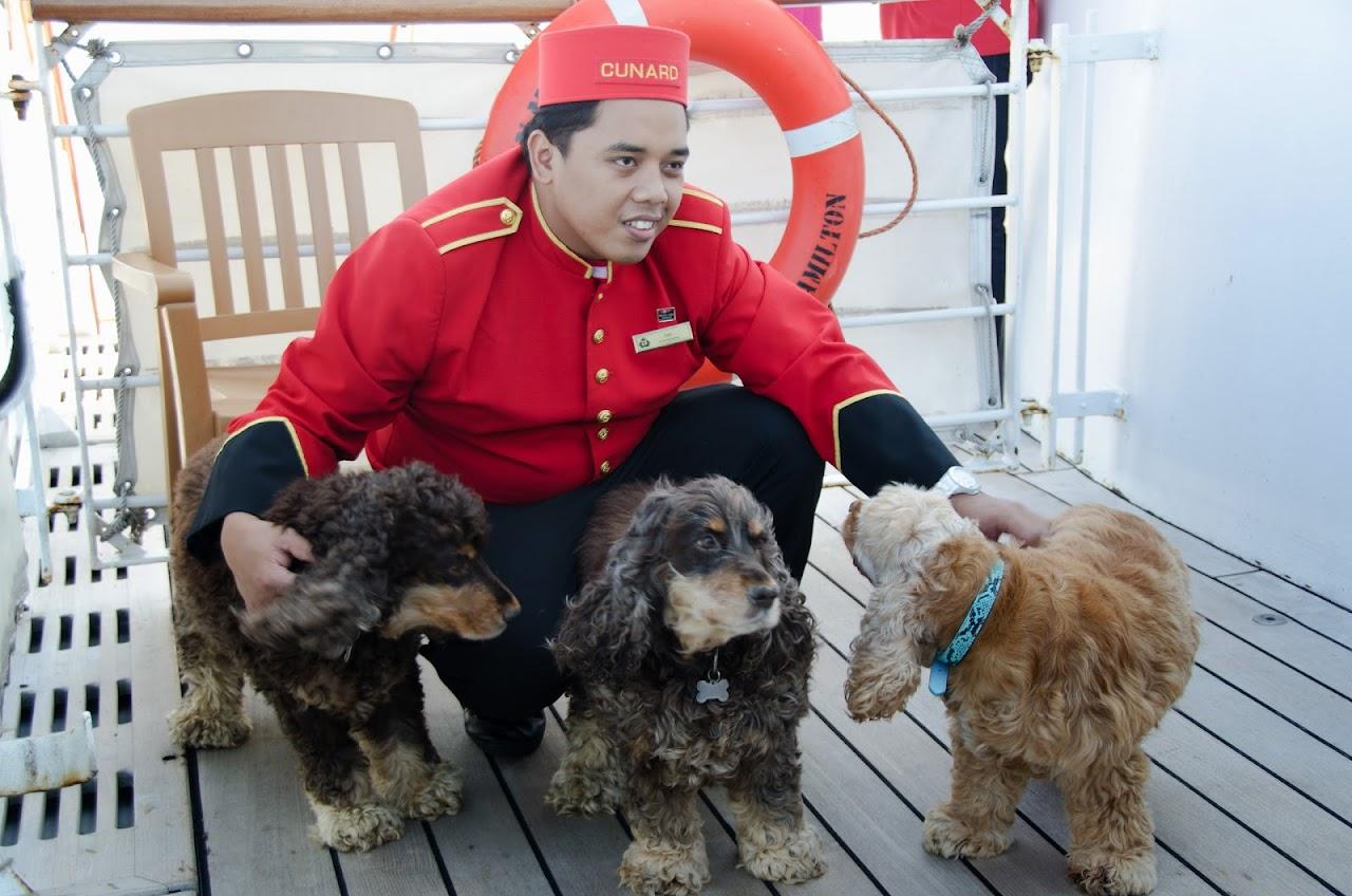 Jojo with dogs