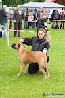 20100513-Bullmastiff-Clubmatch_31057.jpg