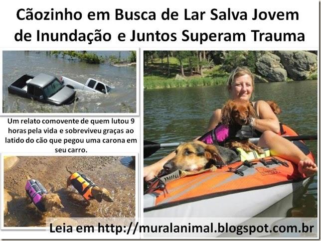 Cãozinho em Busca de Lar Salva Jovem