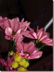 flor-tumblr-facebook-25