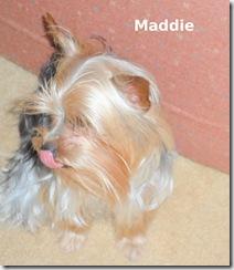 Little-Maddie