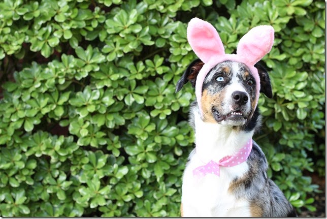 Puppy Easter Costume DIY Dog Costumes Headband