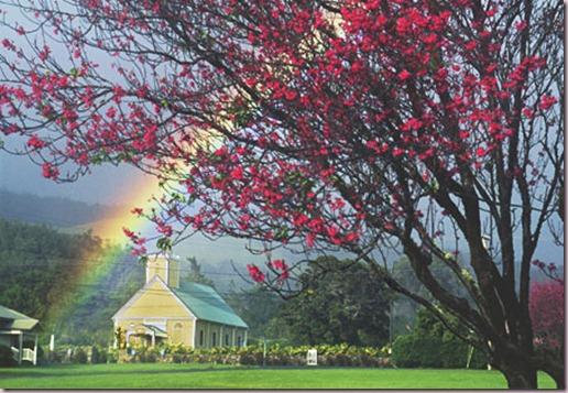 Cherry Blossoms  Waimea, Hawaii