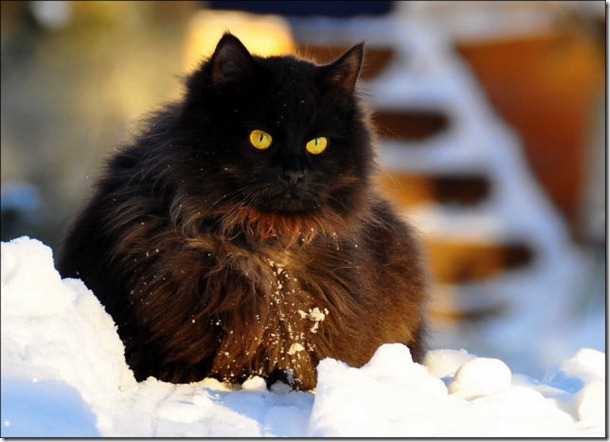 cats-play-snow-5