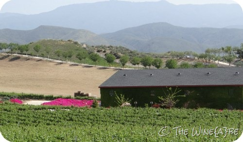 barn_vineyard_mountain