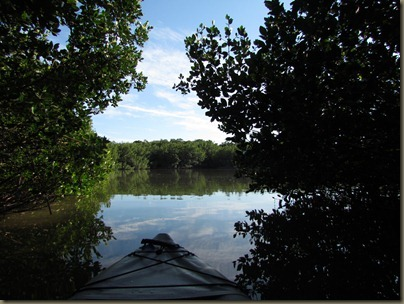 kayaking at Curry Hammock State Park, leaving mangrove