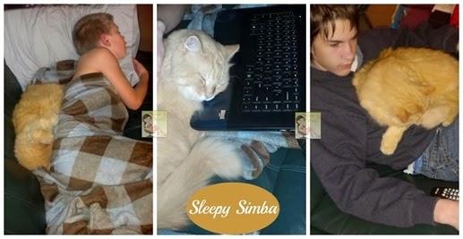 Sleepy Simba[4]