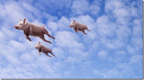 风口上的猪