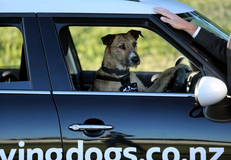 driving-dogs-3